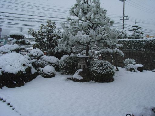 2月9日(雪)タイトル:ウラギンシジミ続報_f0105542_14189.jpg