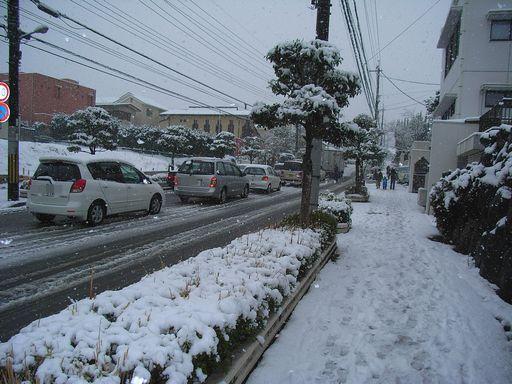 2月9日(雪)タイトル:ウラギンシジミ続報_f0105542_1425167.jpg