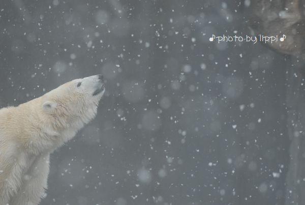 雪の動物園_b0024758_22523092.jpg