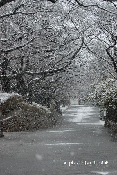 雪の動物園_b0024758_2310148.jpg