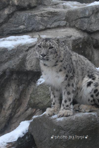雪の動物園_b0024758_2384720.jpg