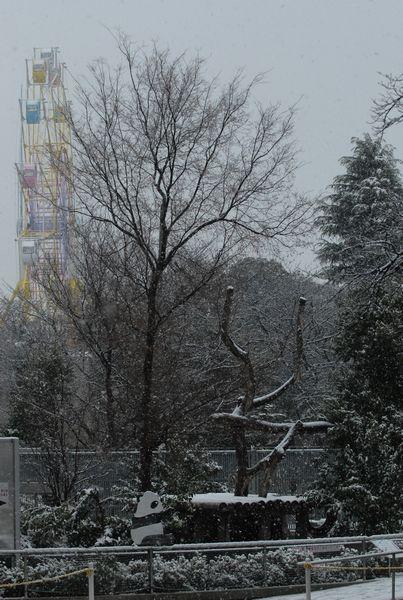 雪の動物園_b0024758_2393561.jpg