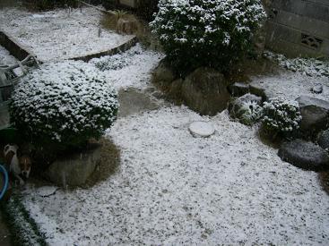 雪は冷たいに決まってます~♪_d0134867_2325920.jpg
