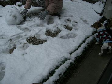 雪は冷たいに決まってます~♪_d0134867_2335157.jpg