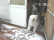 雪模様・・_f0072767_19215034.jpg