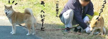 レスキューっ子達_b0057675_12501424.jpg
