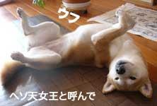 レスキューっ子達_b0057675_1252378.jpg