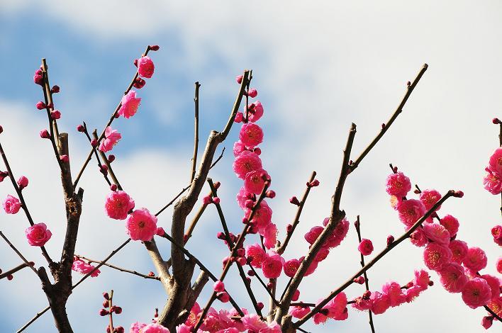 2月の観光 in 太宰府_a0042310_21264459.jpg