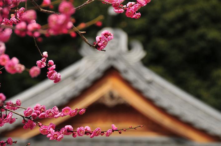 2月の観光 in 太宰府_a0042310_21265725.jpg