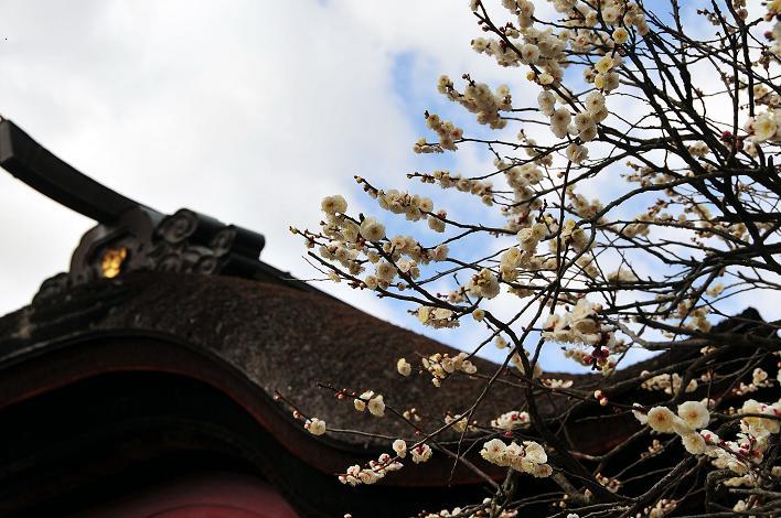 2月の観光 in 太宰府_a0042310_21301776.jpg