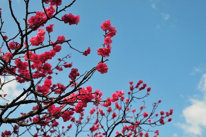 2月の観光 in 太宰府_a0042310_2136354.jpg