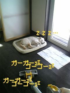 小夏参上!_f0148927_1949661.jpg