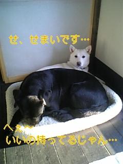 小夏参上!_f0148927_1950188.jpg