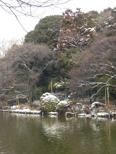 雪景色_e0085133_11451424.jpg