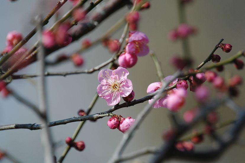 2月10日(晴れ時々くもり)タイトル:梅開花_f0105542_1962598.jpg