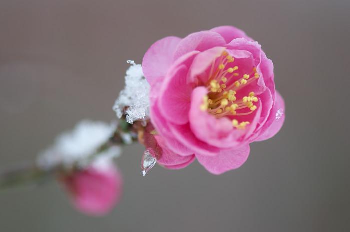 残雪の朝_e0056449_21535032.jpg