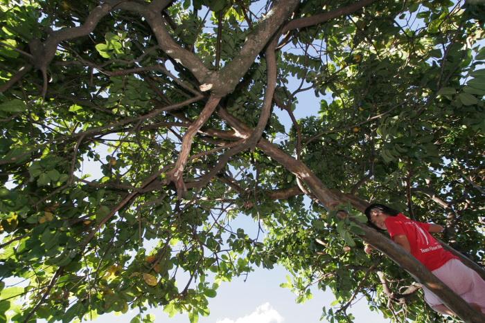 グアバの季節。_e0110461_19102862.jpg