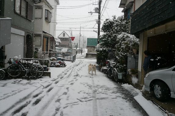 Snow world_f0097683_1928173.jpg