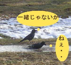 f0109202_20155138.jpg