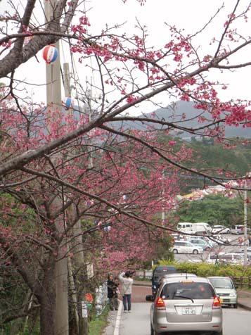 ☆桜☆_b0116722_22191076.jpg