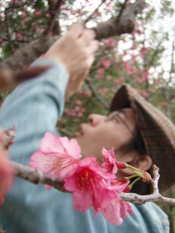 ☆桜☆_b0116722_22203028.jpg