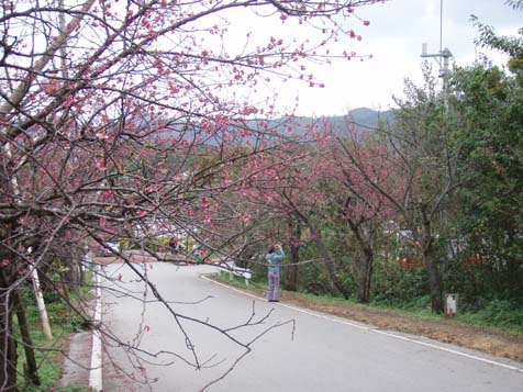 ☆桜☆_b0116722_222039.jpg