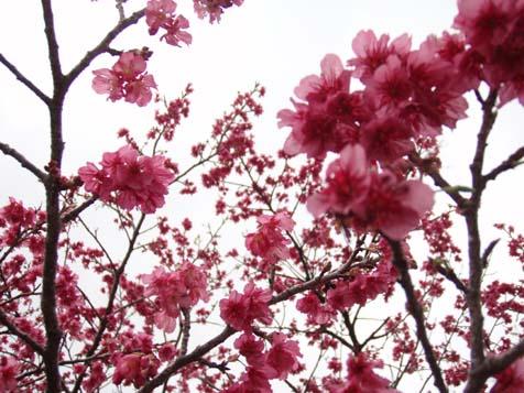 ☆桜☆_b0116722_22212990.jpg