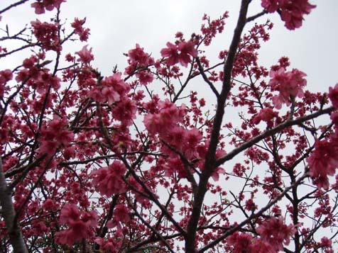 ☆桜☆_b0116722_2221434.jpg