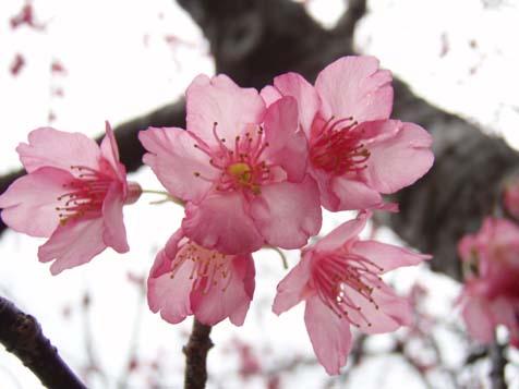 ☆桜☆_b0116722_2221850.jpg