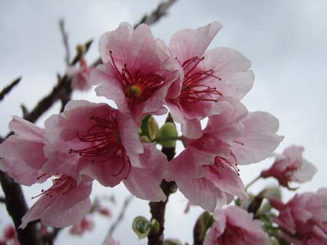 ☆桜☆_b0116722_22282963.jpg