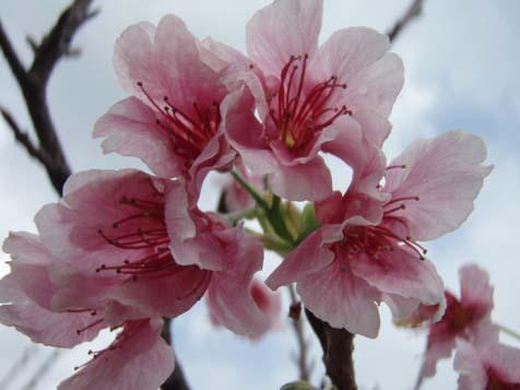 ☆桜☆_b0116722_2228396.jpg