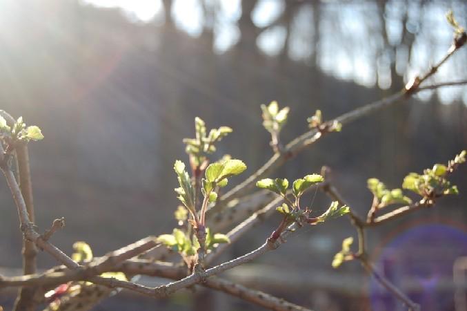 春の足音♪_d0104926_354357.jpg