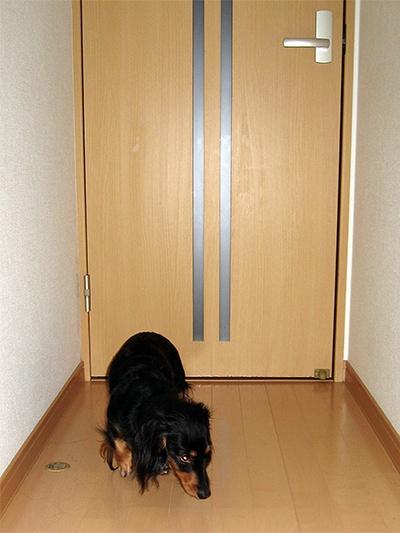 扉開けて~