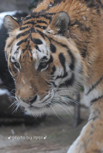 雪の動物園 その2_b0024758_22435266.jpg
