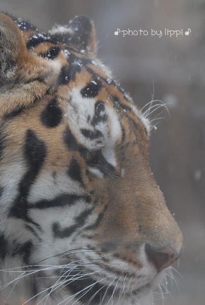 雪の動物園 その2_b0024758_22443686.jpg