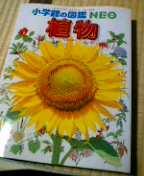 f0074659_041741.jpg