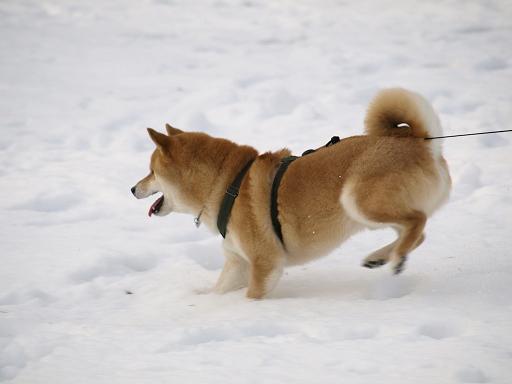 また雪だ~!_e0023790_06243.jpg