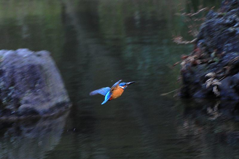 ウメカワを撮ってきました。_b0024798_751294.jpg