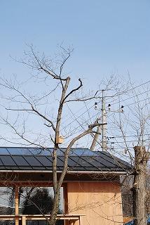 木を植えました!_c0124100_1661271.jpg