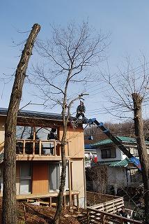 木を植えました!_c0124100_166195.jpg