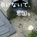 b0087409_1156255.jpg