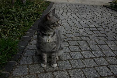 猫のマツ子さん_b0019313_12185292.jpg