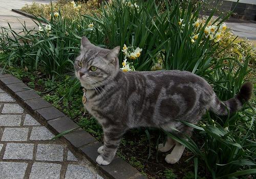 猫のマツ子さん_b0019313_122053.jpg