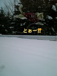 来春_f0148927_18255944.jpg