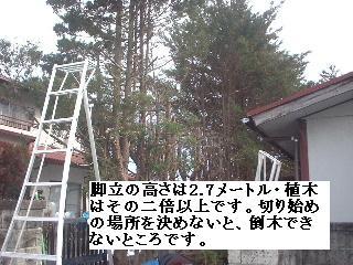 f0031037_2093443.jpg