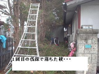 f0031037_2095817.jpg