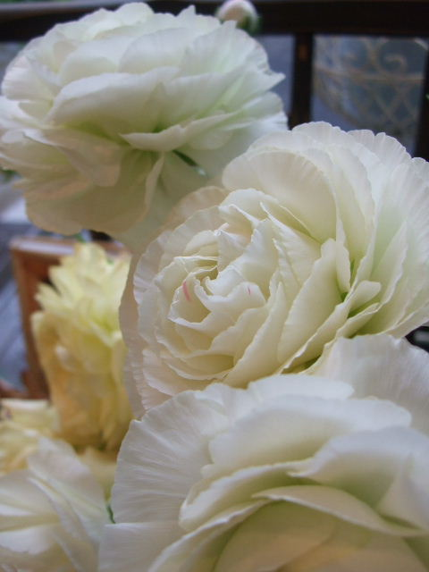 オークリーフ(絵になる花たち)_f0049672_18285289.jpg