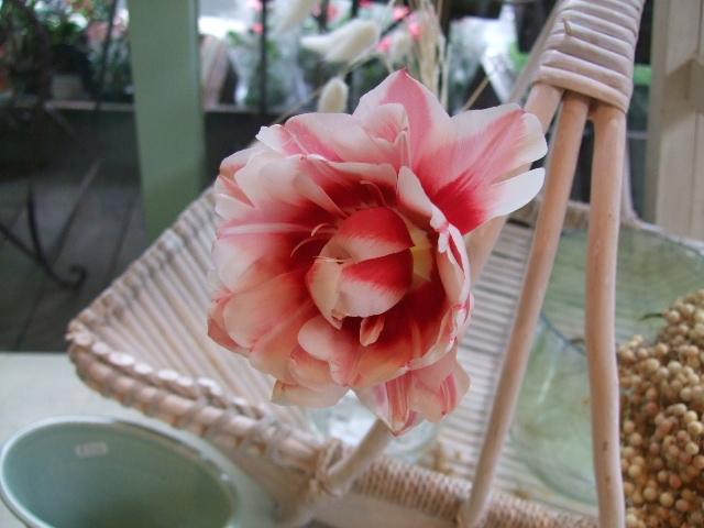 オークリーフ(絵になる花たち)_f0049672_1832268.jpg