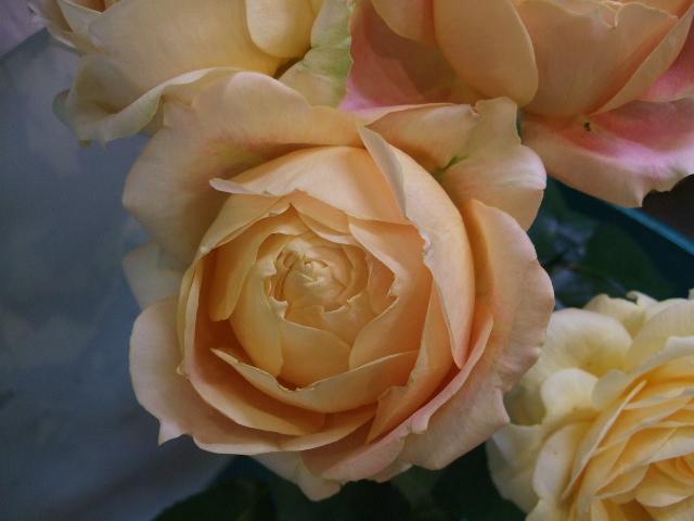 オークリーフ(絵になる花たち)_f0049672_1833166.jpg