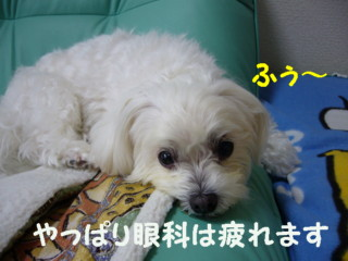 f0145192_16112728.jpg